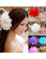 Bijoux de tête fleur blanche